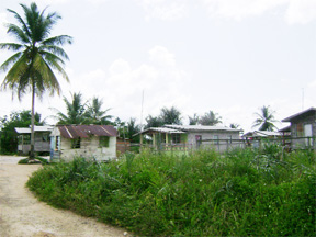 The coconut tree at left has been there since the land was leased to Bhanwari. The family never cut it down.
