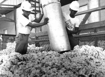National Service pioneers bringing in the cotton harvest