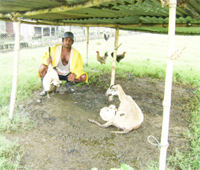 This Dochfour farmer holds up a lamb which died from cramps. The mother and remaining lamb in this photo may suffer the same fate.