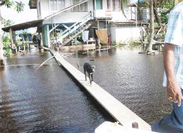 A dog on a bridge in the Mahaicony Creek yesterday.
