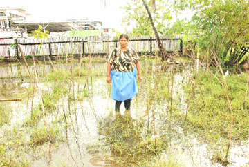 Marriam Khan of Greenfield stands amid bramble which once supported bora vines. Her garden is her only means of support.