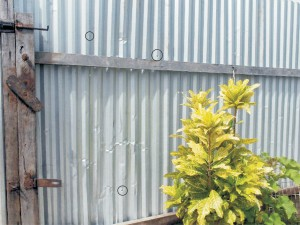 Three of the four bullets discharged by police at Laing Avenue yesterday morning pierced the  front zinc fence.