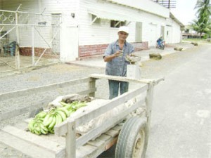 A Wakenaam farmer selling his produce from a cart which he pushes around the island.
