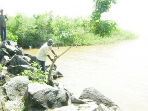 A resident of Wakenaam points to a mark on a tree where the water reaches during spring  tide.