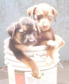 Who wouldn't want to offer these cute puppies a good home? They are waiting at the GSPCA.