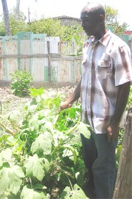 Mark Archibald reaping vegetables from his garden.