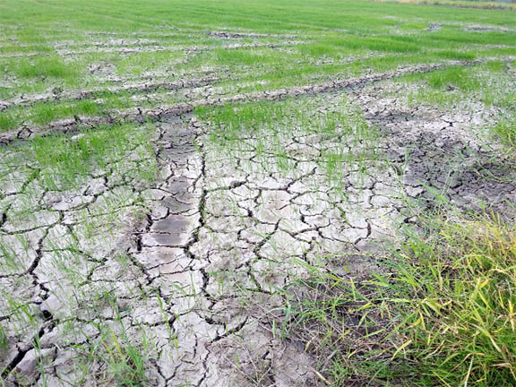 A parched field at Wash Clothes on Monday.