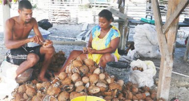 Rohit and his wife prepare the coconuts to make copra