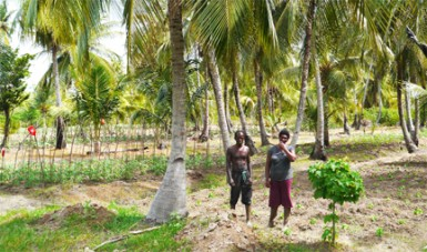 Albert and Trudy Richmond in their coconut and cash crop farm