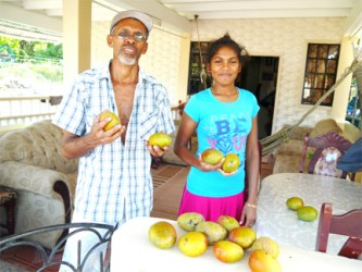 Roseann and father, Alfred Martin display their mangoes