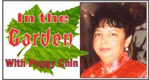Garden (Peggy Chin)