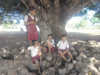 Hanging out under the mango tree before school
