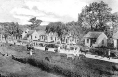 Roadside on a sugar estate circa 1890