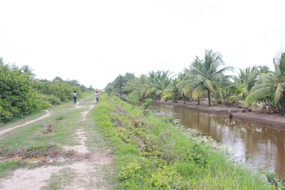 The long road (dam) leading into Barnwell, aback Mocha, East Bank Demerara
