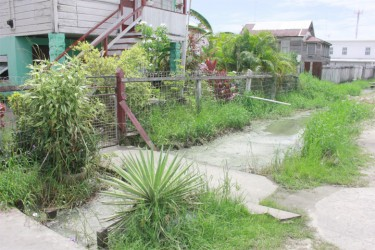 The drain in front of Rose Clarke's Albert Street residence is a toxic mess