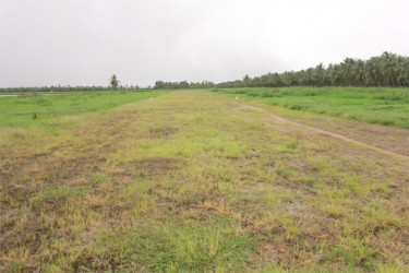 Grass on the Wakenaam airstrip on Thursday (Photo by Arian Browne)