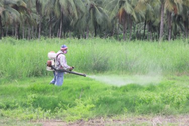 Spraying growth parallel to the airstrip on Thursday (Photo by Arian Brown)