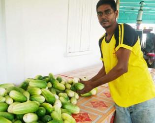 Rakesh Jaglall displaying his cucumbers