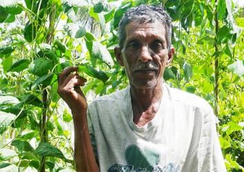 Ramnarine Persaud next to his bora plants
