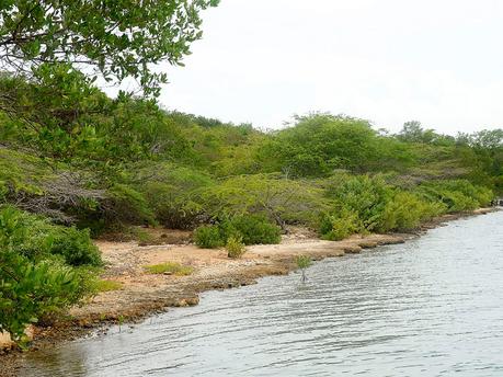Goat Islands (Jamaica Gleaner photo)