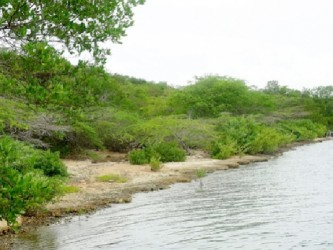 The controversial Goat Islands, the proposed site for a logistics hub in Jamaica (Gleaner File photo)
