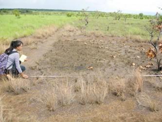 Documenting Prehistoric Rupununi Phase House Floor at Karnambu