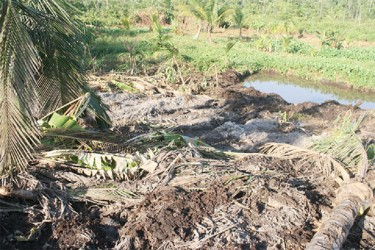 Another section of a farm owned by the Holders shows uprooted coconut trees. In the background is a stick marker and a pond dug by airport expansion workers.