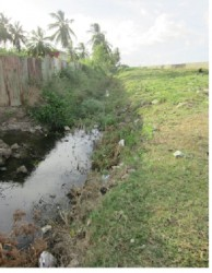 The trench that separates residents from the Uitvlugt seawall is heavily overgrown with vegetation and riddled with garbage, resulting in an inefficient drainage system when overtopping of the seawall occurs. Residents say they have consistently complained to the RDC.