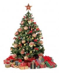 20131229xmas tree