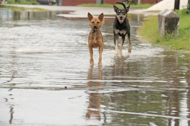 A game of tag with dogs through floodwaters.
