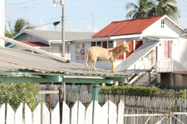 A dog on a rooftop in the scheme