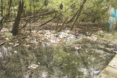 A section of the garbage-strewn swamp