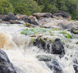 Rapids on the Cuyuni River