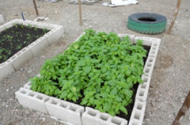 Cultivating food in a concrete block
