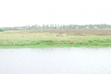 An Essequibo rice field