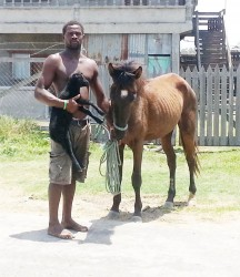 Cassius, a resident of Rising Sun,  was snapped while making his way  home with his lamb and horse
