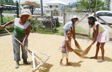 Patricia (left) and her daughter, Tricia (right) along  with two cousins, drying paddy in the yard