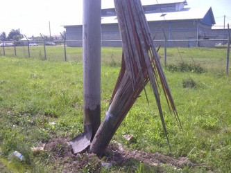 John Teixeira, 70, died after crashing into this utility pole along the Diamond Access Road yesterday morning.