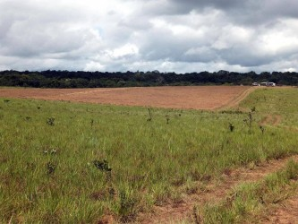 VIASPACE Inc's Giant King Grass propagation nursery site in tropical savanna grassland adjacent to the rain forest in Guyana. (VIASPACE photo)