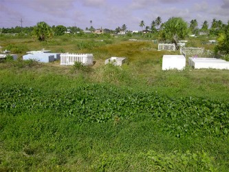 The Beterverwagting cemetery overcome with weeds.