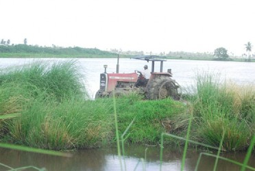 Preparing an Essequibo rice field for cultivation