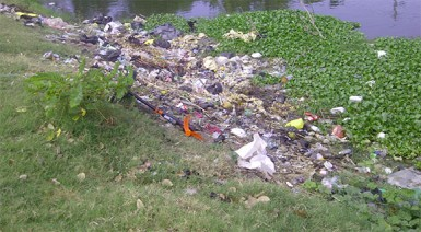 Garbage in the canal separating Good Hope from Mon Repos