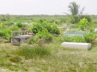 Mon Repos Cemetery covered in bush