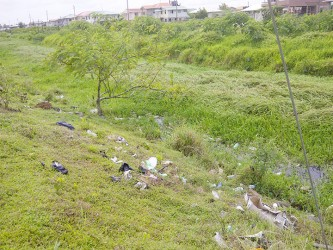 Kaneville Trench filled with bush and some garbage