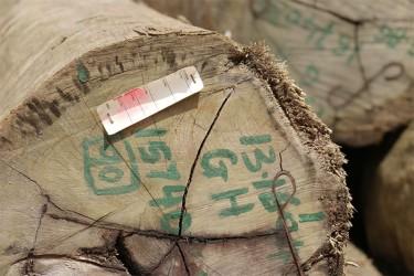 A faded GFC tag on a log at Vaitarna's log yard at Wineperu on Tuesday.
