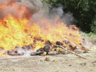 The Customs Anti-Narcotics Unit (CANU) yesterday destroyed over two tonnes of cocaine and marijuana, with an estimated worth of over US$30 million, seized over the past two years. See story on centre pages. (Photo by Arian Browne)