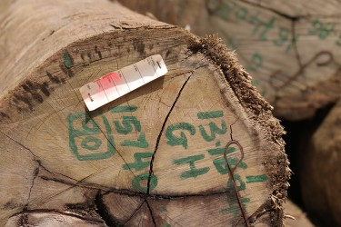A faded GFC tag on a log at Vaitarna's log yard at Wineperu on Tuesday.  The India-based company continues to export logs but is yet to set up its promised processing plant. (Arian Browne photo)