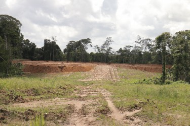 The site for Vaitarna's proposed wood-processing facility at Wineperu on Tuesday.  There is nothing on it. The India-based company continues to export logs but is yet to set up its promised processing plant. (Arian Browne photo)
