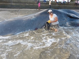 Annette Arjoon-Martins and the beached sperm whale at Kitty foreshore
