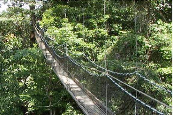 Canopy walkway at Iwokrama (GINA photo) & Govu0027t approves US$100000 loan from GGMC for Iwokrama u2013 Stabroek News